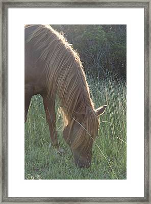 Grazing Horse Framed Print by Nancy Edwards