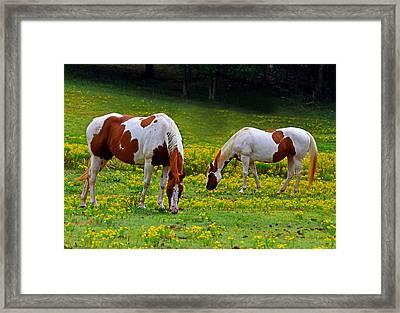 Grazing Horses 001 Framed Print