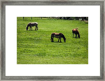 Framed Print featuring the photograph Grazing Horses by Jay Stockhaus