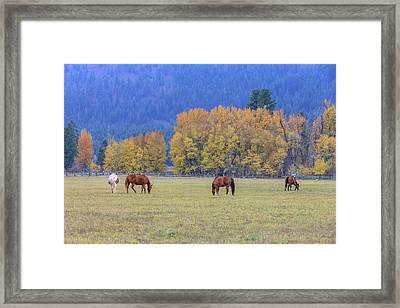 Grazing Horses Winthrop Western Framed Print