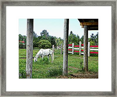 Grazing In The Meadow Framed Print by Dianne  Lacourciere