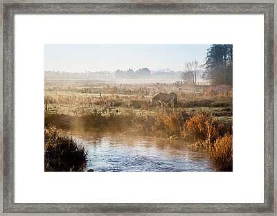 Grazing In The Mist Framed Print by Odd Jeppesen