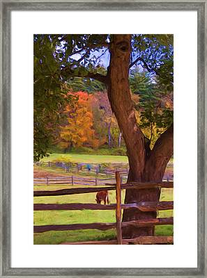 Grazing Framed Print by Joann Vitali