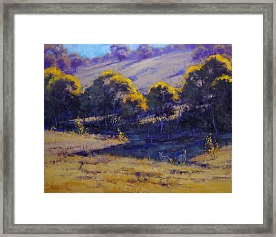 Grazing Kangaroos Framed Print