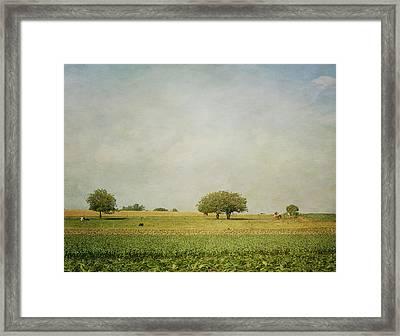 Grazing Framed Print