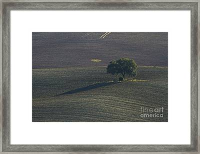 Grazing Land In Andalusia-1 Framed Print by Heiko Koehrer-Wagner