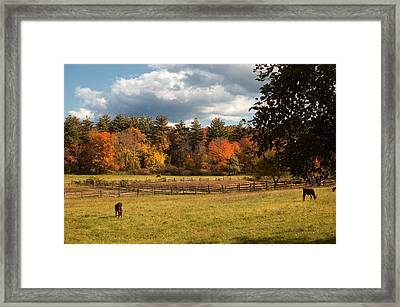 Grazing On The Farm Framed Print