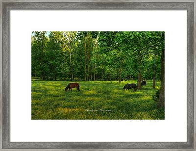 Grazing Framed Print by Paul Herrmann
