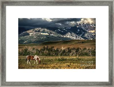 Grazing The Cutback Framed Print by The Stone Age