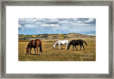 Grazy Day Framed Print by Claudette Bujold-Poirier