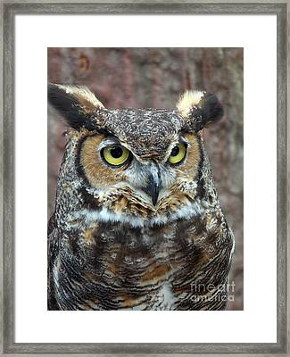 Great And Horned Framed Print by Skip Willits