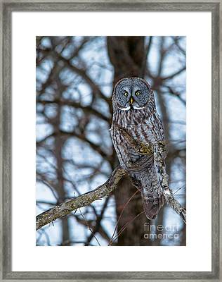 Great Beauty Framed Print by Cheryl Baxter