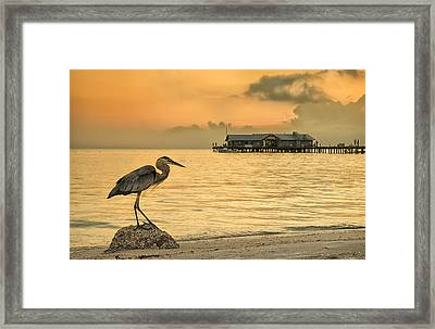 Great Beauty Framed Print