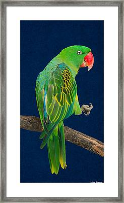 Great-billed Parrot 1 Framed Print by Avian Resources