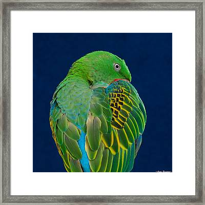 Great-billed Parrot 2 Framed Print by Avian Resources
