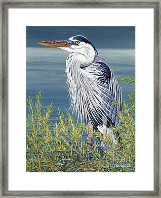 Great Blue Framed Print by Danielle  Perry