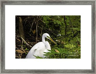 Great Blue Heron - White Framed Print