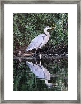 Great Blue Heron 1 Framed Print