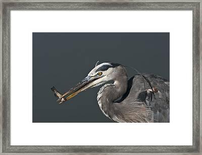 Great Blue Heron - 7345 Framed Print