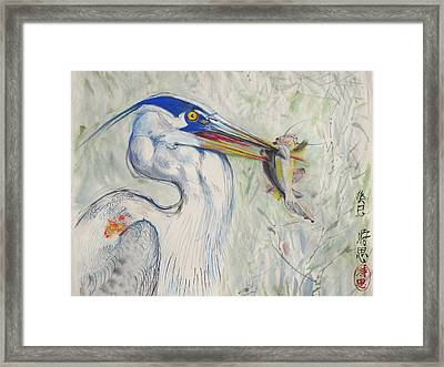 Great Blue Heron And Fish Framed Print by Alejandro  Angio
