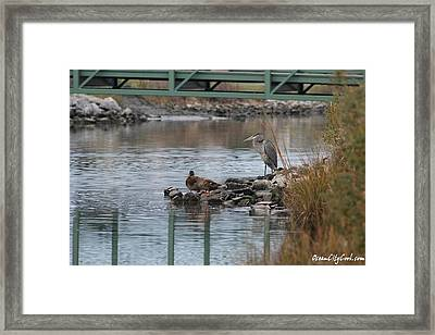 Framed Print featuring the photograph Great Blue Heron And Friends by Robert Banach