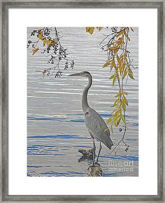 Framed Print featuring the photograph Great Blue Heron by Ann Horn
