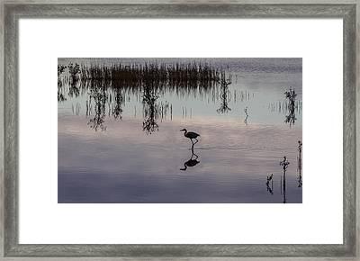 Great Blue Heron At Sundown Framed Print
