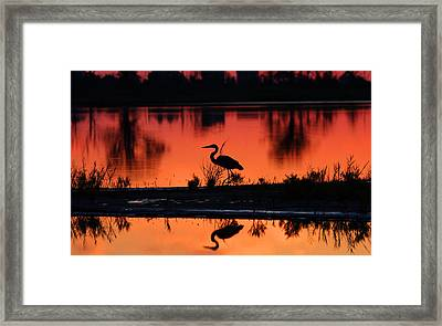 Great Blue Heron At Sunrise Framed Print