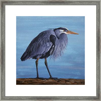 Great Blue Heron Framed Print by Crista Forest