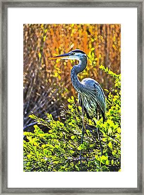 Great Blue Heron Framed Print by Dennis Cox WorldViews
