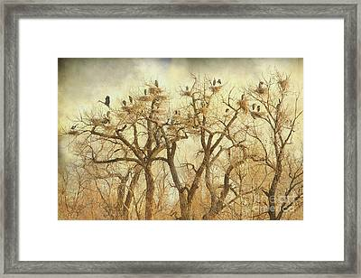 Great Blue Heron Hangout Fine Art Framed Print by James BO  Insogna