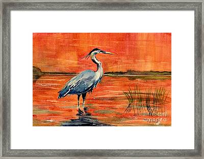 Great Blue Heron In Marsh Framed Print by Melly Terpening