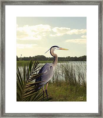 Great Blue Heron In The Bulrushes Framed Print