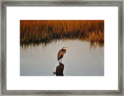 Great Blue Heron In The Marsh - # 20 Framed Print by Paulette Thomas
