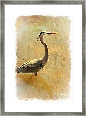 Great Blue Heron Mystique Framed Print by Carol Groenen