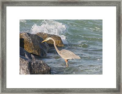 Great Blue Heron On The Prey Framed Print by Christiane Schulze Art And Photography