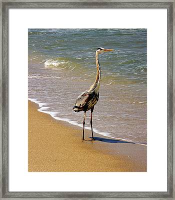 Great Blue Heron On The Surf. Framed Print