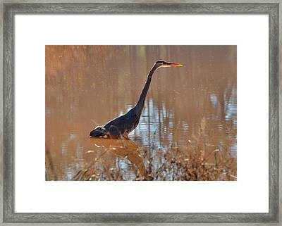 Great Blue Heron On Watch - 3185c Framed Print by Paul Lyndon Phillips