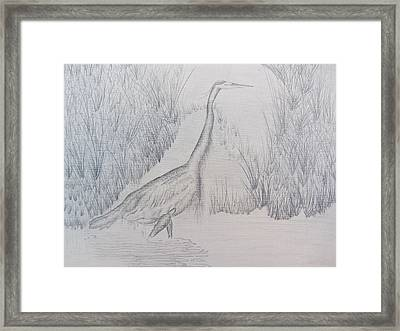 Great Blue Heron Pencil Drawing Framed Print by Debbie Nester