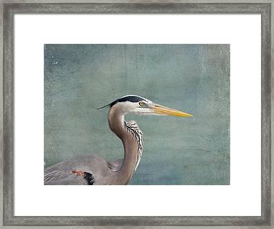 Great Blue Heron - Profile Framed Print by Kim Hojnacki