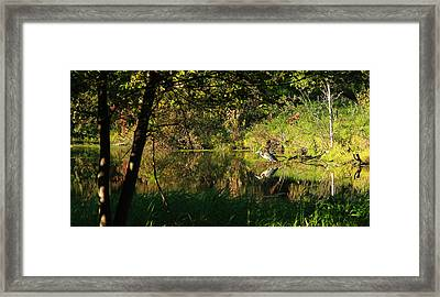 Great Blue Heron Reflecting Framed Print by James Hammen