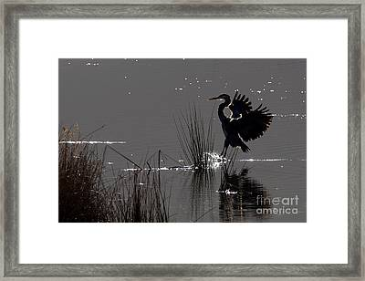 Great Blue Heron Silhouette Framed Print