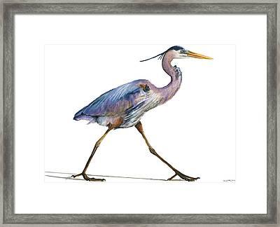 Great Blue Heron Strolling Framed Print by Carlo Ghirardelli