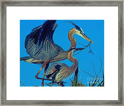 Framed Print featuring the photograph Great Blue Herons - Nest Building by Larry Nieland