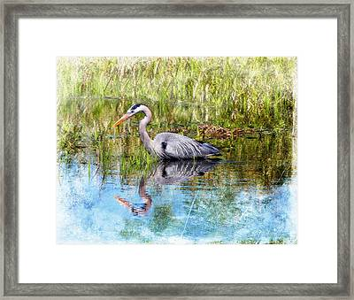 Great Blue Hunter Framed Print