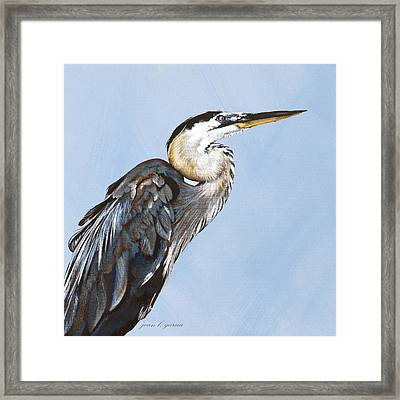 Great Blue I Framed Print