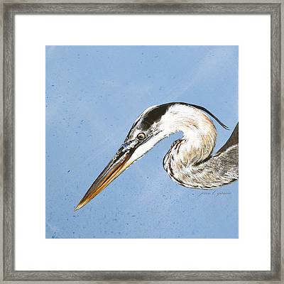 Great Blue Tyler Framed Print