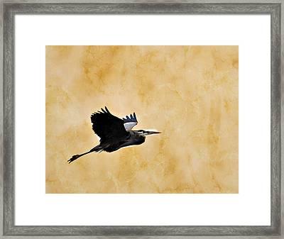 Great Blue In Flight 1 Framed Print by Marty Koch