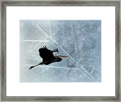 Great Blue In Flight 3 Framed Print by Marty Koch