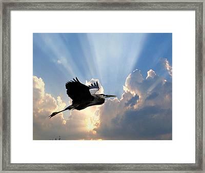 Great Blue In Flight 9 Framed Print by Marty Koch